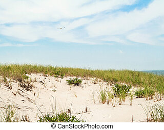 Beach Scape - Sand dunes in Island Beach State Park along...