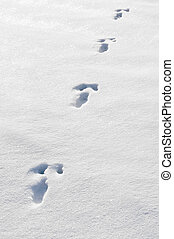 Rabbit Track - a track from a rabbit in the snow