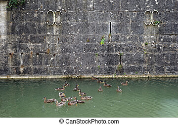 Embankment and group of wild ducks in the river...