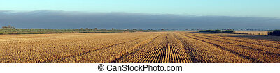 Stubble - Panorama of stubble farm field, France...