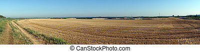 Stubble - Panorama of stubble field in Farm...
