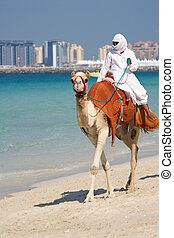 Camel on Jumeirah Beach, Dubai - Camel walking along...