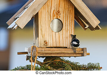 Coal tit eating hemp seeds on the wooden bird feeder in the...