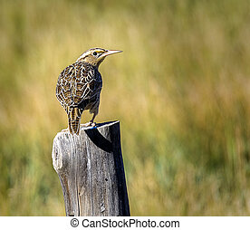 Bird on Fence Post - A bird perched on a fence post in...
