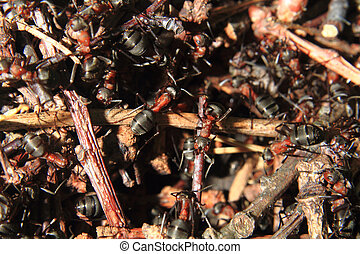 detail of forest anthill as nice insect background