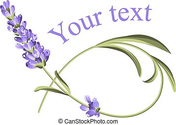 Your text template. Frame of lavender flower in watercolor...