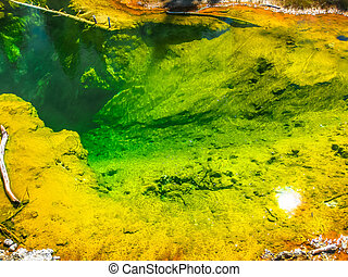 Yellowstone Seismograph Pool - Closeup of colorful...