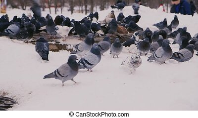 Many pigeons are heated around the heating duct in the background people clean the snow