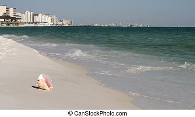 Conch Destin Skyline - Conch shell sits on the beach with...