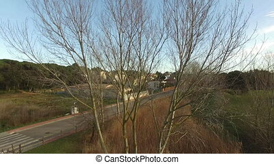Deciduous Tree in Winter - Deciduous Tree without Leaves in...