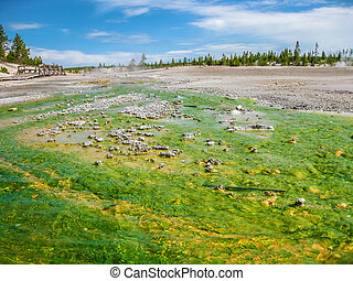 Norris Geyser Basin - Landscape of colorful hot streams at...