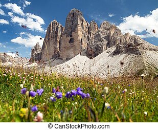 Drei Zinnen or Tre Cime di Lavaredo with beautiful flowering...