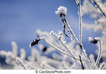 The branches of the Bush covered by hoarfrost on a background of winter sky