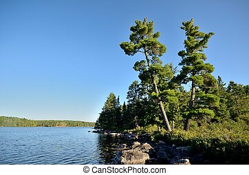Scenic Wilderness Lake - Tall Pine Trees By A Wilderness...