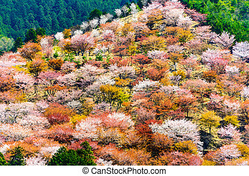 Yoshino, Japan in Spring - Yoshinoyama, Nara, Japan spring...