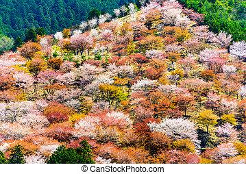 Yoshino, Japan in Spring - Yoshinoyama, Nara, Japan spring...