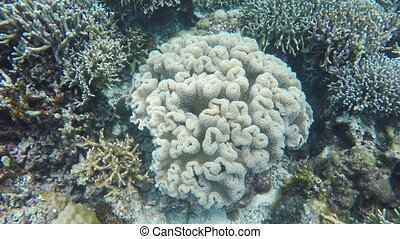 soft corals in tropical sea - Soft corals in the tropical...