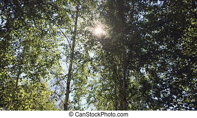 the sun appears through branches of trees .