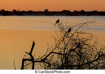 African sunset on Zambezi river, in front silhouette of two...