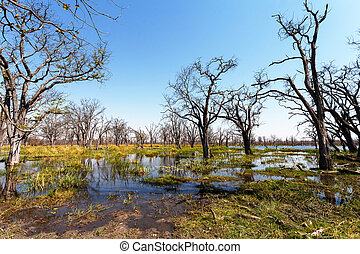 Moremi game reserve landscape - beautiful landscape in the...