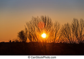 Sun behind dark silhouettes of trees, with orange colored...