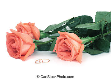 Roses and wedding rings on a white background