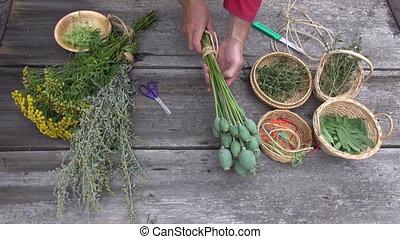 herbalist preparing various herbs - Man gardener herbalist...