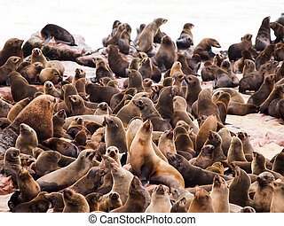 Brown Fur Seal colony at Cape Cross - Brown Fur Seal, or...