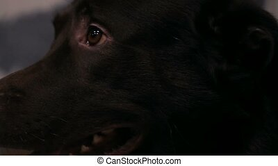 Big brown domestic dog close-up