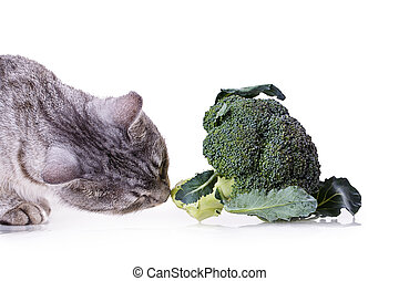 broccoli cat - gray cat smelling a broccoli