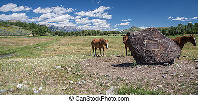 Wyoming Horses - Horses in Jackson Hole, Wyoming with the...