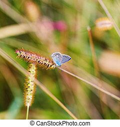 spike butterfly outside day green background bokeh
