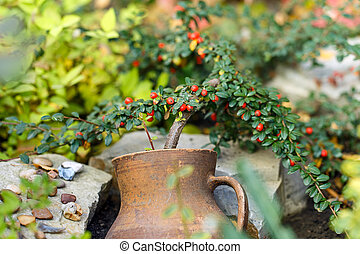 crock pot flower outside background