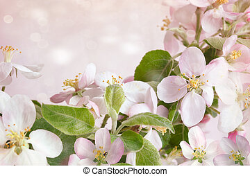 Spring blossoms against pink background