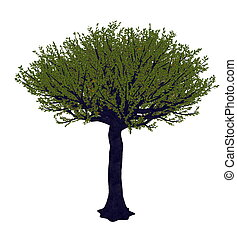 Forest sandpaper fig or tree, ficus exasperata - 3D render -...