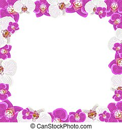 Beautiful orchid flowers frame isolated on white background for greeting card or invitation design.