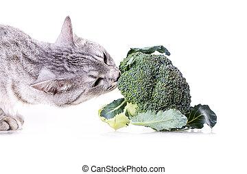 broccoli cat - gray cat smelling a broccoli