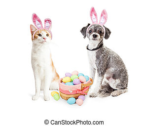 Cute Kitten and Puppy With Easter Basket - Cute dog and cat...