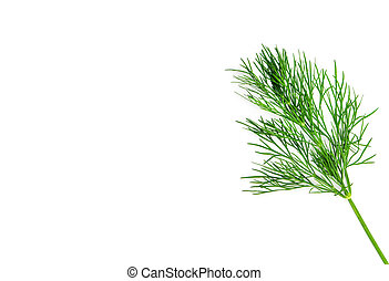 dill - Green dill isolated on white background