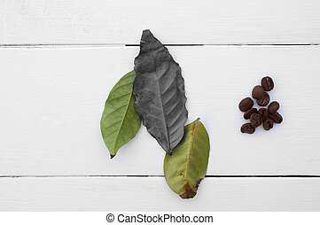 Creative. The leaves and coffee beans on a white background....