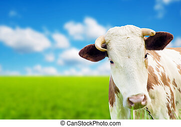 Funny cow on a green summer meadow Blurred background