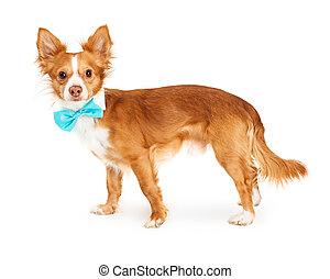 Dog Wearing Fancy Blue Bowtie