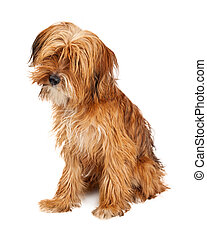 Cute Shaggy Dog Sitting Tilting Head - Adorable young mixed...