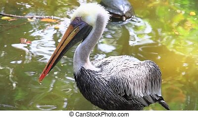 Foreground of a pelican in Costa Rica