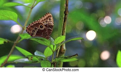 Blue Butterfly Costa Rica