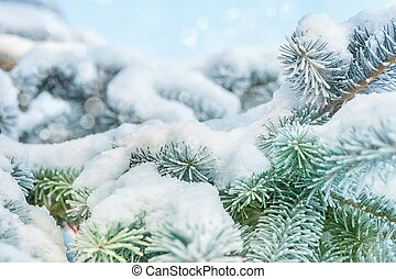 Winter background - Coniferous branches covered with...