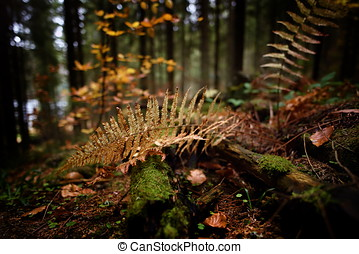 Yellow leaves of a fern in the forest