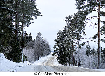 Scandinavian winter road lined with conifer trees