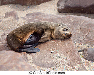 Young brown fur seal sleaping on the rock