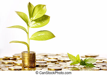 money growing - gold coin money with green leaf growing